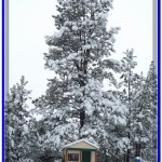 Our children's playhouse was engulfed by the large snowy tree.