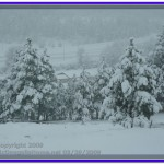 Spring Snow Storm at Jefferson City, Montana