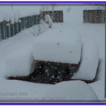 Almost 20 inches of snow at Jefferson City, Montana