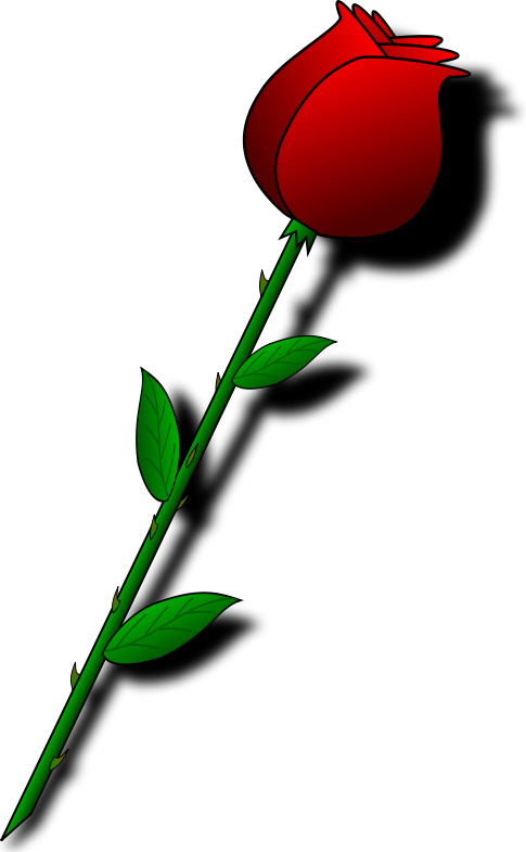 A rose for Mom