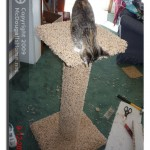 The new scratching post for the cats