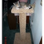 Arwen doesn't waist time getting used to the scratching post.