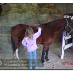 Alia brushing down her horse at her riding lesson.